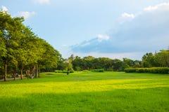 Ajardine a árvore verde do prado no parque público da natureza Fotos de Stock