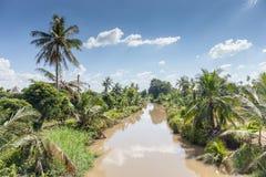 Ajardine árvores de coco com o canal da água no campo Foto de Stock Royalty Free