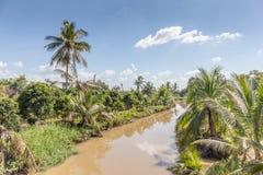 Ajardine árvores de coco com o canal da água no campo Fotos de Stock Royalty Free