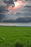 Ajardine antes da tempestade Imagem de Stock Royalty Free