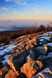 Ajardine antes do nascer do sol Imagem de Stock Royalty Free
