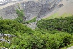 Ajardine ao longo da fuga no parque nacional de Torres del Paine, Patagonia chileno, o Chile Foto de Stock