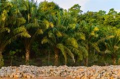 Ajardine ao longo do parque ou da floresta com palmeiras atrás de uma pilha das pedras cambodia Imagens de Stock