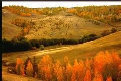 Ajardine as árvores dos montes e das ravinas do pespektiva cobertas com as folhas de outono douradas Imagens de Stock