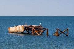 Ajardine, as gaivota de mar que sentam-se em um cais velho, abandonado Foto de Stock