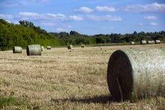 Ajardine, bolachas do feno no prado Foto de Stock