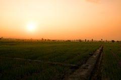 Ajardine campos cultivam e luz solar no tempo da noite Imagem de Stock Royalty Free