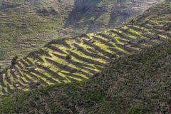 Ajardine campos terracced Lanzarote perto da cidade pequena de Haria Foto de Stock