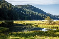 Ajardine a cena da água com as entradas maré de gramas do pântano, e de montanhas no fundo Fotografia de Stock Royalty Free
