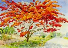 Ajardine colorido original del árbol y de la emoción de la flor de pavo real Imágenes de archivo libres de regalías