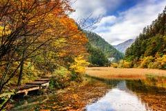 Ajardine com água claro do lago entre madeiras da queda Fotos de Stock
