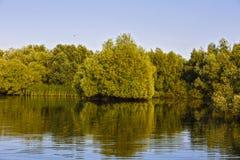 Ajardine com água e vegetação no delta de Danúbio Imagens de Stock Royalty Free