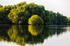 Ajardine com água e vegetação no delta de Danúbio Imagem de Stock Royalty Free