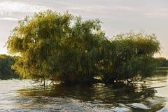Ajardine com água e vegetação no delta de Danúbio Fotos de Stock Royalty Free