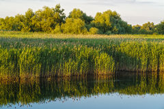 Ajardine com água e vegetação no delta de Danúbio Foto de Stock