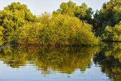 Ajardine com água e vegetação no delta de Danúbio Foto de Stock Royalty Free