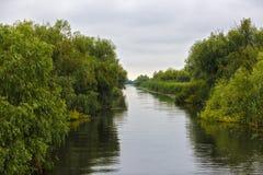 Ajardine com água e vegetação no delta de Danúbio Imagem de Stock