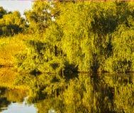 Ajardine com água e vegetação no delta de Danúbio Imagens de Stock