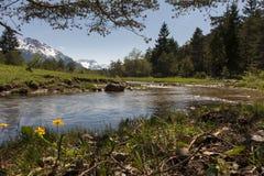 Ajardine com água, flores, grama, prados Fotos de Stock