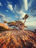 Ajardine com a árvore bonita na montanha, no céu azul e no mar no nascer do sol Fotografia de Stock
