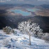 Ajardine com a árvore coberto de neve na inclinação de montanha Imagens de Stock Royalty Free