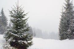 Ajardine com a árvore de abeto no prado coberto de neve na queda de neve Fotografia de Stock