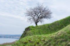 Ajardine com a árvore de abricó de florescência situada no beira-rio de Dnepr Foto de Stock