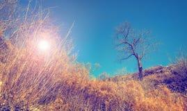 Ajardine com árvore desencapada e o sol que brilham através dos arbustos secos Imagem de Stock Royalty Free