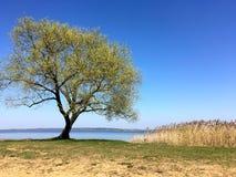 Ajardine com árvore e bastão na costa do lago Imagem de Stock