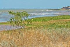 Ajardine com árvore e ervas na baía Fotografia de Stock