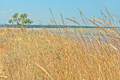Ajardine com árvore e ervas na baía Imagens de Stock Royalty Free