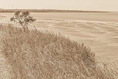 Ajardine com árvore e ervas na baía, sepia Imagem de Stock