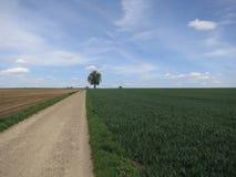 Ajardine com árvore e trator no horizonte Fotografia de Stock Royalty Free