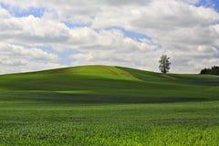 Ajardine com árvore, grama e o céu sós. Imagens de Stock Royalty Free