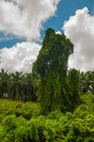 Ajardine com a árvore incomum no fundo do céu com nuvens Malásia, Bornéu, Sabah Fotografia de Stock Royalty Free