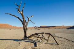 Ajardine com árvore inoperante, as dunas de areia vermelhas e superfície rachada seca da argila em Deadvlei, deserto de Namib, Na Imagens de Stock Royalty Free