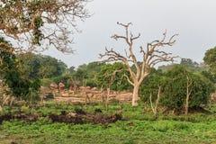 Ajardine com a árvore inoperante seca no parque nacional de Yala Foto de Stock Royalty Free