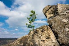 Ajardine com a árvore na área de Harz, Alemanha Imagens de Stock Royalty Free