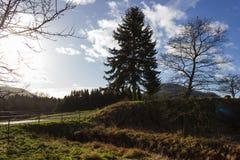 ajardine com a árvore no dia ensolarado do advento do céu azul em dezembro Fotografia de Stock