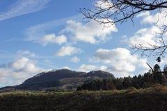 ajardine com a árvore no dia ensolarado do advento do céu azul em dezembro Imagens de Stock