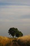Ajardine com a árvore no sol do verão no alvorecer Fotografia de Stock