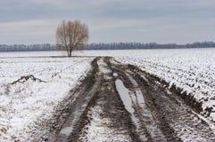 Ajardine com a árvore só na borda da estrada da estrada secundária ao lado do campo agrícola em Ucrânia Foto de Stock Royalty Free