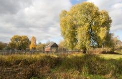 Ajardine com árvores altas e um celeiro velho Fotografia de Stock