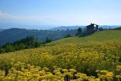 Ajardine com árvores, campo amarelo e uma casa velha longe Imagens de Stock Royalty Free