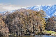 Ajardine com árvores da montanha e um rio na parte dianteira Fotografia de Stock