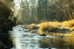 Ajardine com árvores das montanhas e um rio na parte dianteira Imagens de Stock