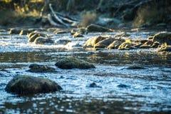Ajardine com árvores das montanhas e um rio na parte dianteira Fotografia de Stock Royalty Free