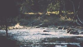 ajardine com árvores das montanhas e um rio na parte dianteira - vintage fi Imagens de Stock Royalty Free