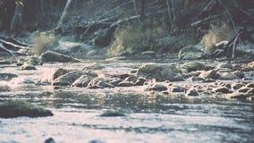ajardine com árvores das montanhas e um rio na parte dianteira - vintage fi Fotos de Stock