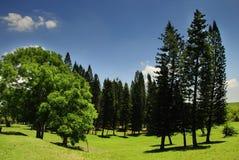 Ajardine com árvores de pinho Fotografia de Stock Royalty Free